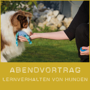 Lernverhalten von Hunden verstehen