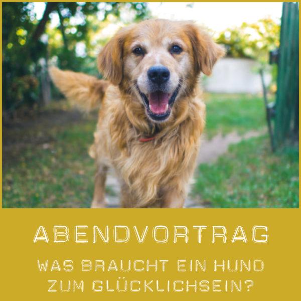 Was braucht ein Hund zum glücklich sein