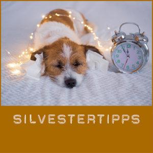 Silvestertipps für Hunde