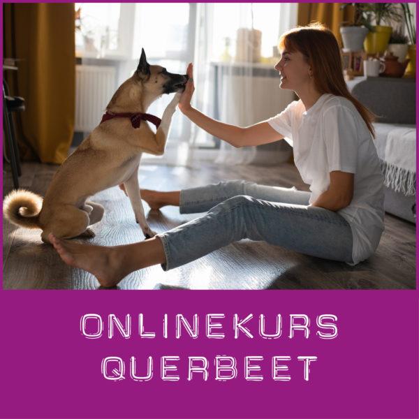 Hundeschule Onlinekurs
