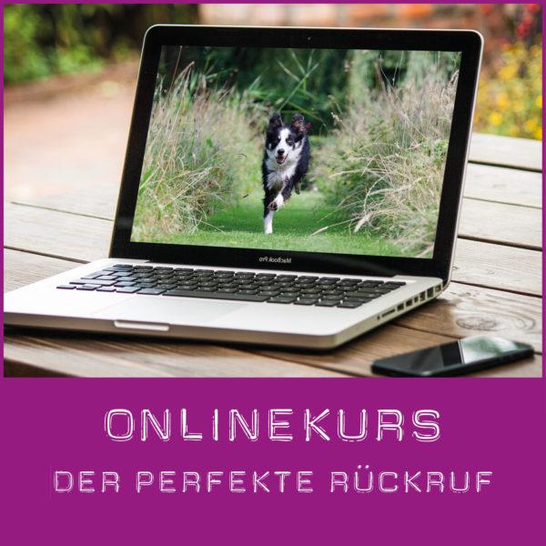 Rückruftraining online