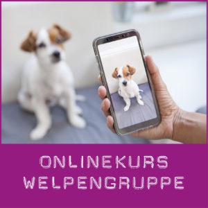 Onlinekurs für Welpen