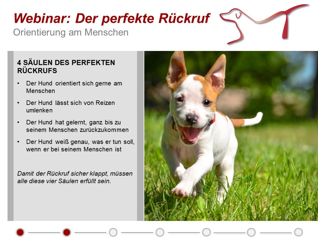 Der perfekte Rückruf für Ihren Hund - Webinar