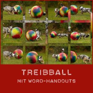 Treibball lernen
