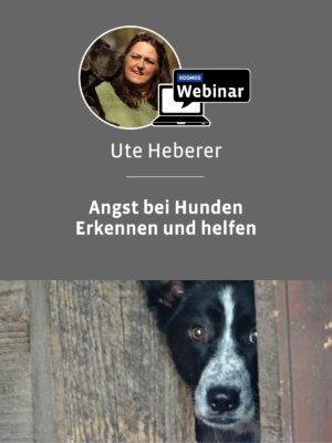 Seminar für Hundetrainer: Angst bei Hunden