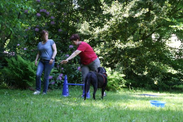 Hundetraining in der Praxis