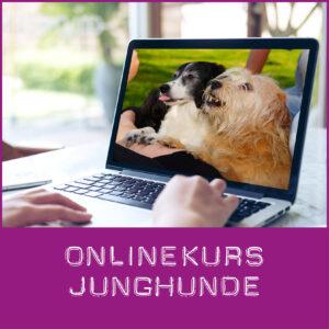 Junghunde Onlinekurs